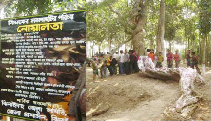 হরিণাকুন্ডুর তিনশ বছরের সাক্ষী 'নোয়ালতা'