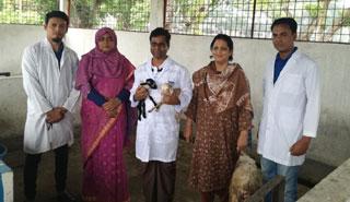 বাকৃবি গবেষকদের সাফল্য: সুপার ওভুলেশনে ২৫-৩০টি ভ্রুণ উৎপাদন