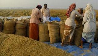 সুনামগঞ্জে সরকারিভাবে চাল কেনার লক্ষ্যমাত্রায় ধস