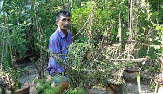আয়ূব-নিপা দম্পতির সংগ্রহে ১০ সহস্রাধিক ওষুধি গাছ