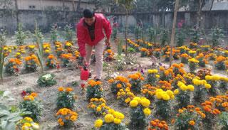 শোভা ছড়াচ্ছে পার্বতীপুর থানা চত্ত্বরের ফুলের বাগান