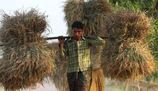 'কৃষিবান্ধব নীতির কারণে দেশ খাদ্য উৎপাদনে স্বয়ংসম্পূর্ণ'