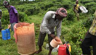 চা বাগানে কীটনাশকের আধিক্য, হুমকিতে জীববৈচিত্র্য