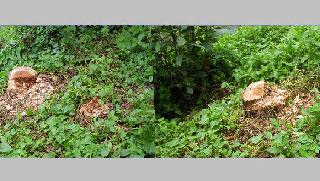 রাণীনগরে সরকারি গাছ কেটে নিল ইউপি সদস্য