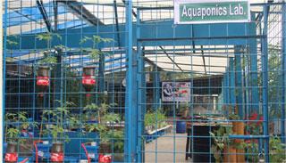 বাকৃবিতে অ্যাকুয়াপনিক্স বিষয়ক আর্ন্তজাতিক কর্মশালা