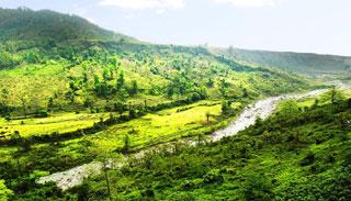 ঘুরে আসুন কলকাতার ডুয়ার্সের সামসিংয়ে