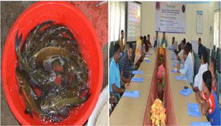 বাকৃবিতে গাং মাগুরের কৃত্রিম প্রজনন কৌশল শীর্ষক প্রশিক্ষণ