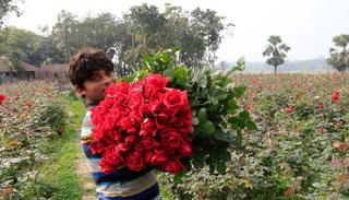 ১২০ টাকাতে ঘুরে আসুন গোলাপ গ্রাম