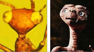 ১০ কোটি বছর আগের 'ভিনগ্রহী' পতঙ্গের হদিশ (ভিডিও)