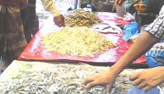 রাজাপুরে নদীতে বিষ প্রয়োগে বিভিন্ন প্রজাতির ডিমওয়ালা মাছ নিধন