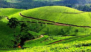ঘুরে আসুন সবুজ গালিচায় মোড়ানো মুন্নার, কেরালা
