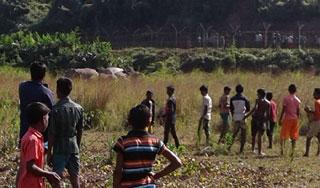 রৌমারী সীমান্তে বন্যহাতির তান্ডবে নির্ঘুম মানুষ