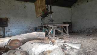 চা বাগানে ও কৃষিজমিতে স'মিলে পরিবেশের ক্ষতি