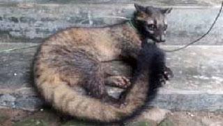 পাবনায় বিরল প্রাণি দেখতে কৌতুহলীদের ভিড়