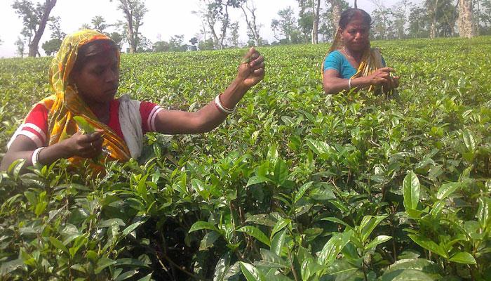 শ্রমিক ইউনিয়ন নির্বাচন : মজুরি চুক্তি বাস্তবায়নের উদ্যোগ নেই