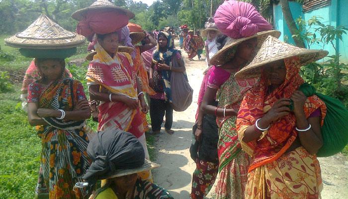 বেকারত্বের ঘানি টেনে জীবনসংগ্রামে নারী চা শ্রমিকরা
