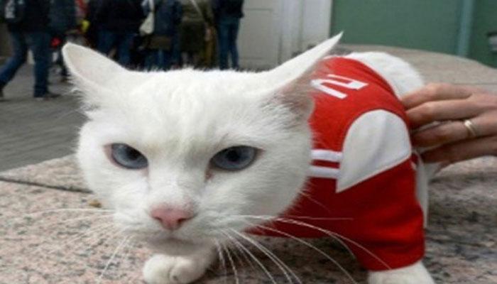 বিশ্বকাপের ফলাফলের ভবিষ্যদ্বাণী করবে অ্যাকিলিস নামের 'বিড়াল'