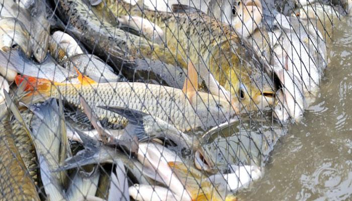 মাছ রপ্তানিতে বিশ্বে তৃতীয় বাংলাদেশ