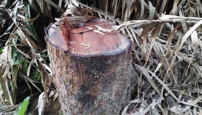 লাউয়াছড়ায় গাছ চুরি: রেঞ্জ কর্মকর্তা প্রত্যাহার
