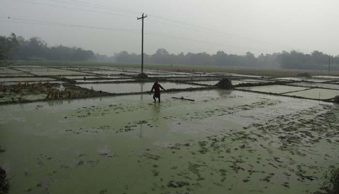 আক্কেলপুরে তীব্র শীতেও বীজ তলা তৈরীতে ব্যস্ত কৃষক