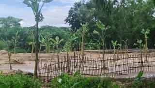 কমলগঞ্জে হতদরিদ্রের জমি জবরদখল করে কলাবাগান
