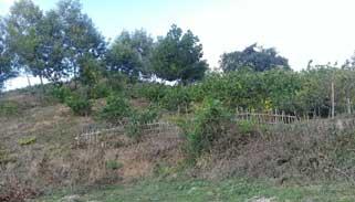 লাউয়াছড়া'র টিলাভূমি বেদখল, হুমকিতে বন্যপ্রাণী ও জীববৈচিত্র্য