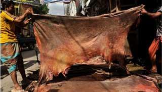 চামড়ার ধারাবাহিক দরপতনে নজরদারি জরুরি