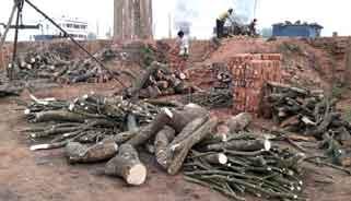 আক্কেলপুরে ইটভাটায় পোড়ানো হচ্ছে কাঠ : ব্যহত ফসলের উৎপাদন