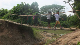 শ্রীপুরে তিন গ্রামের লোকজনের গাছের সাঁকো দিয়ে পারাপার
