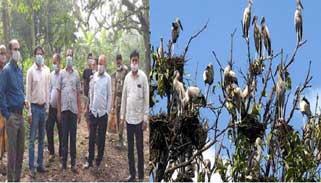 শামুকখোল পাখির জন্য বাসা ভাড়া করল সরকার