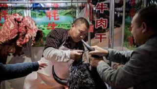 চীনের বাজারে আবারো বিক্রি হচ্ছে বাদুড়-কুকুর-বিড়াল-সাপ-ব্যাঙ