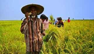 ইন্দোনেশিয়াকে হটিয়ে ধান উৎপাদনে বাংলাদেশ তৃতীয়