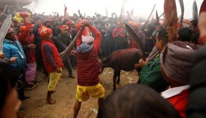 নেপাল গাধিমাই: বিশ্বের সবচেয়ে বড় রক্তাক্ত উৎসব