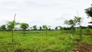 শেরপুরের নকলায় ৭ একর জমিতে গড়ে উঠেছে ইকোপার্ক