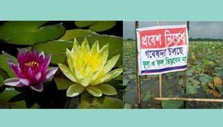 গবেষণার স্বার্থে কুমিল্লার পদ্মবিলে ভ্রমণ নিষেধ
