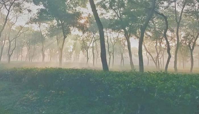দেশের সর্বনিম্ন তাপমাত্রা শ্রীমঙ্গলে : ৬ ডিগ্রি সেলসিয়াস