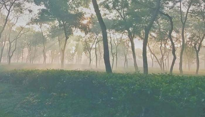 শ্রীমঙ্গলে দেশের সর্বনিম্ন তাপমাত্রা ৬.৫ ডিগ্রি সেলসিয়াস