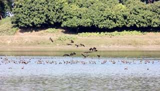 রাণীশংকৈলের বনাঞ্চল : যেন পাখির অভয়াশ্রম