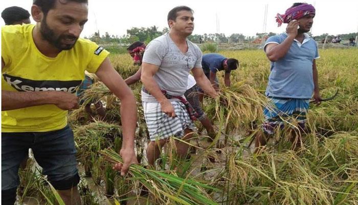ভালুকায় কৃষকদের পাশে উপজেলা ছাত্রলীগ